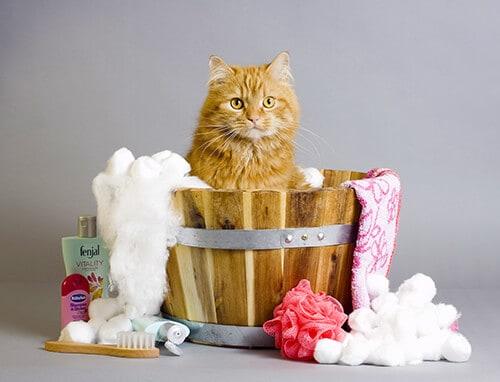 Cat getting a Flea Bath Treatment at Toronto K9 Center