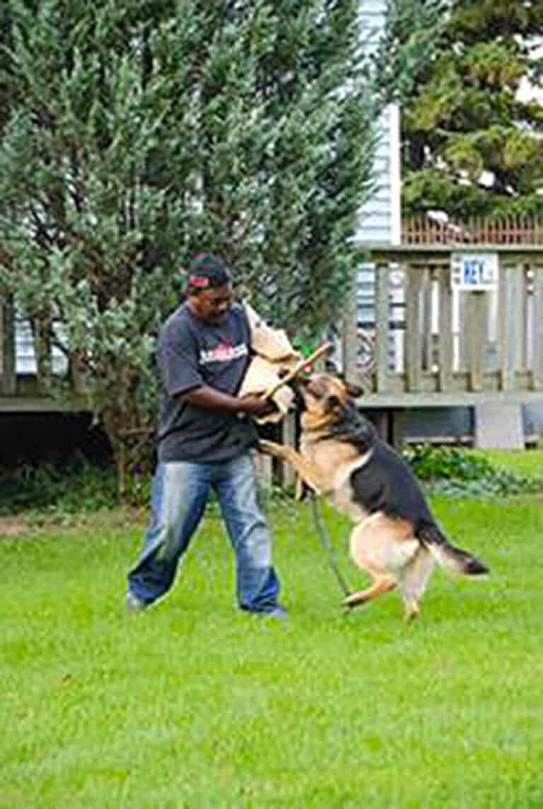 Roger Richards training a German Shepherd dog at TorontoK9Center.com