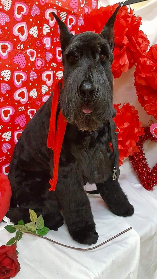 Dog Groomed at Toronto K9 Center