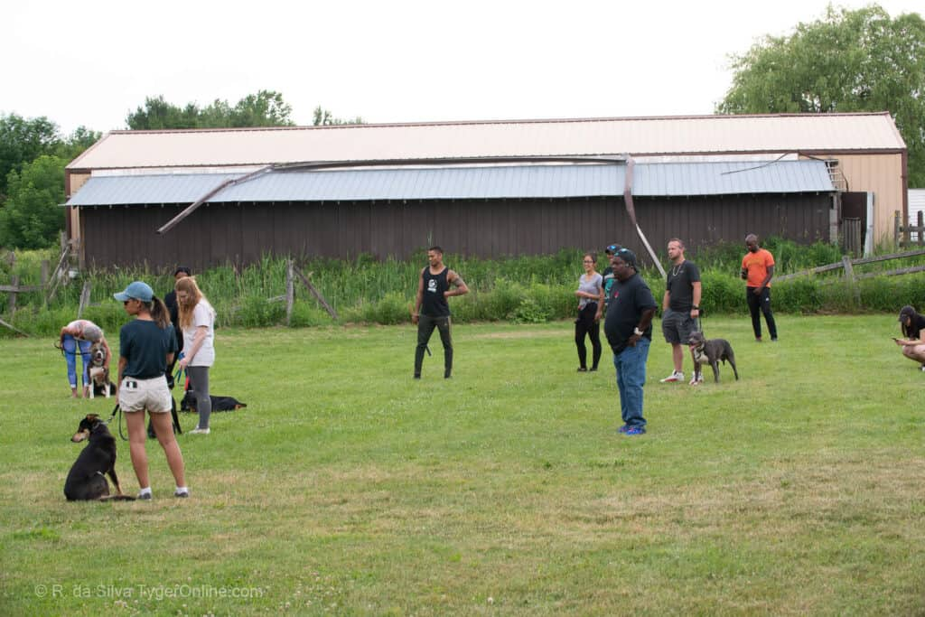 Toronto K9 Center Group Training Picture #5599